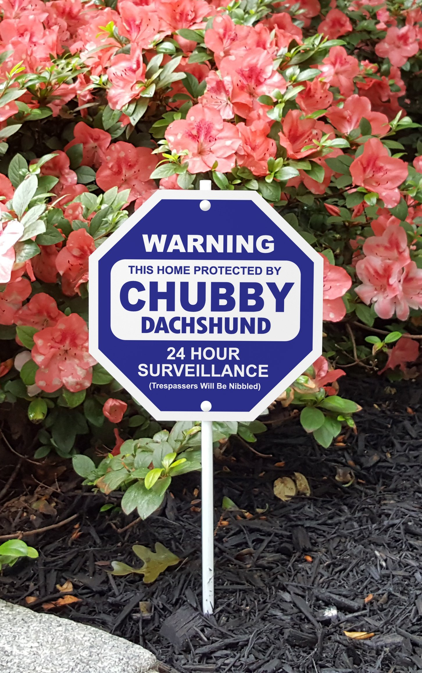 Imagine This Chubby Dachshund Silly Security Sign