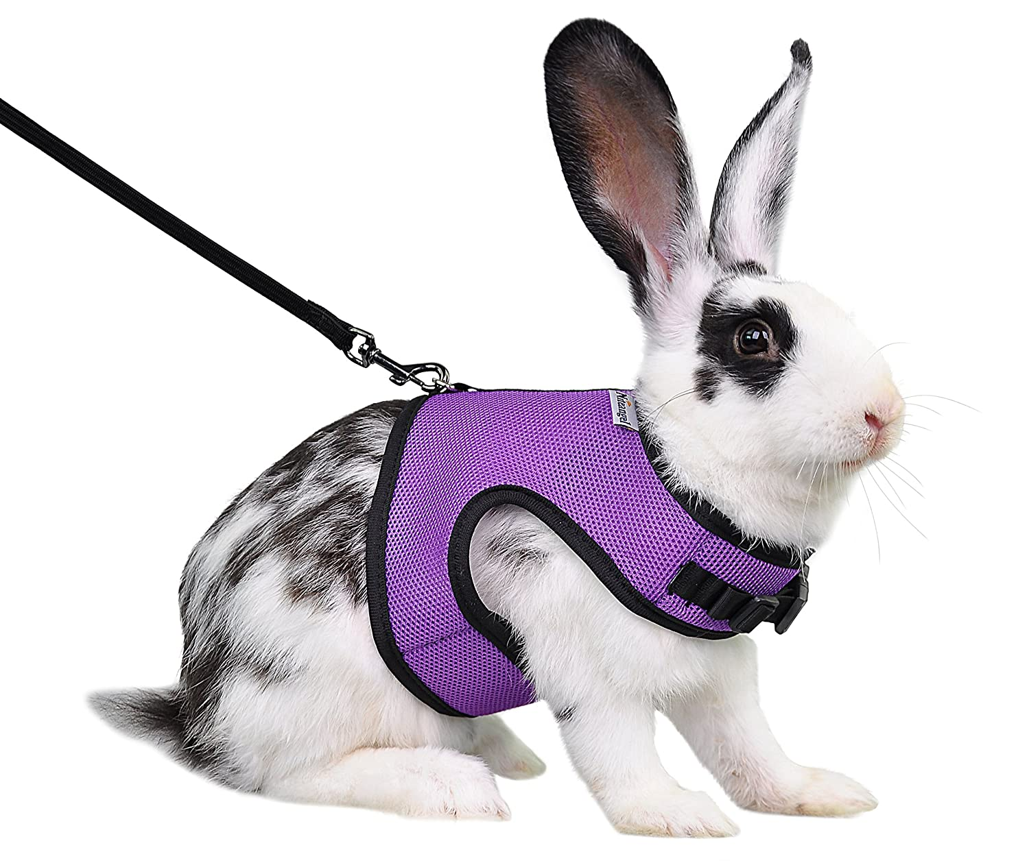 Pet supplies niteangel adjustable soft harness with elastic leash amazon  com animals chewing wires bunny chewing
