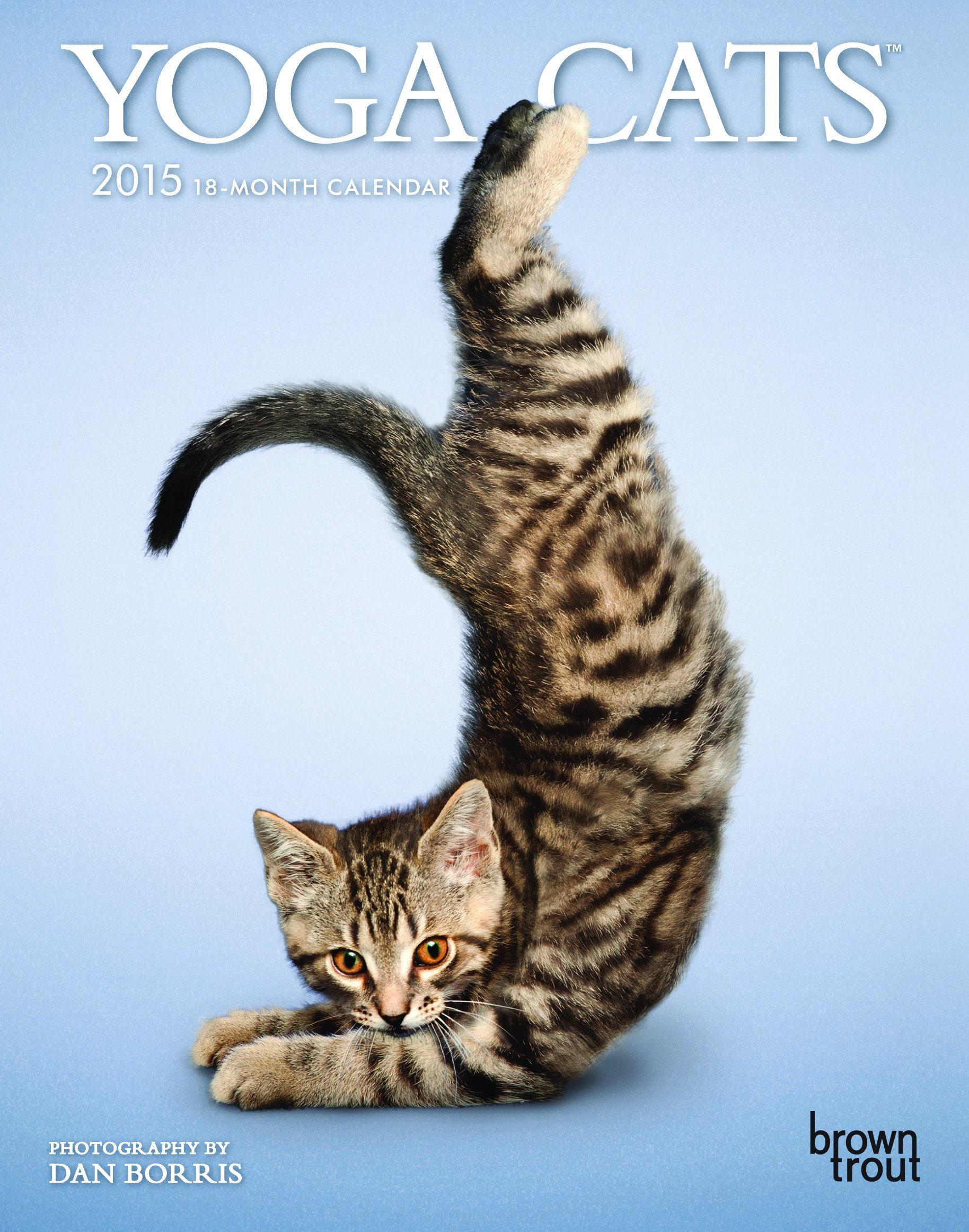 Yoga Cats 2015 Desk Diary: Amazon.es: Browntrout Publishers ...