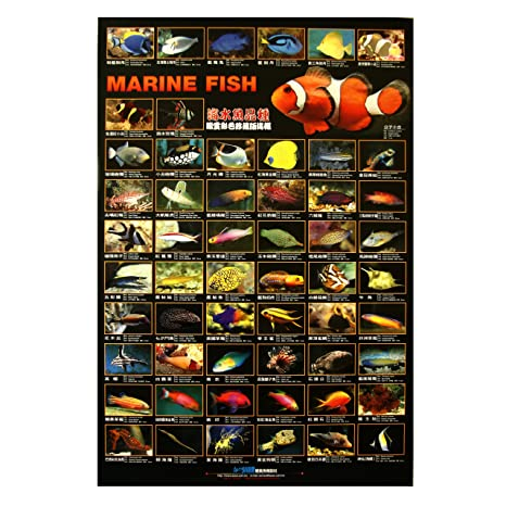 AZOO Aquarium Decor Marine Fish Poster