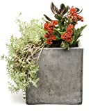 Repose Cubo Succulent Planter, Medium