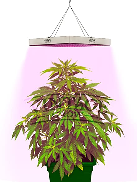 vintage grow best led grow lights for indoor plants perfect for growing a small