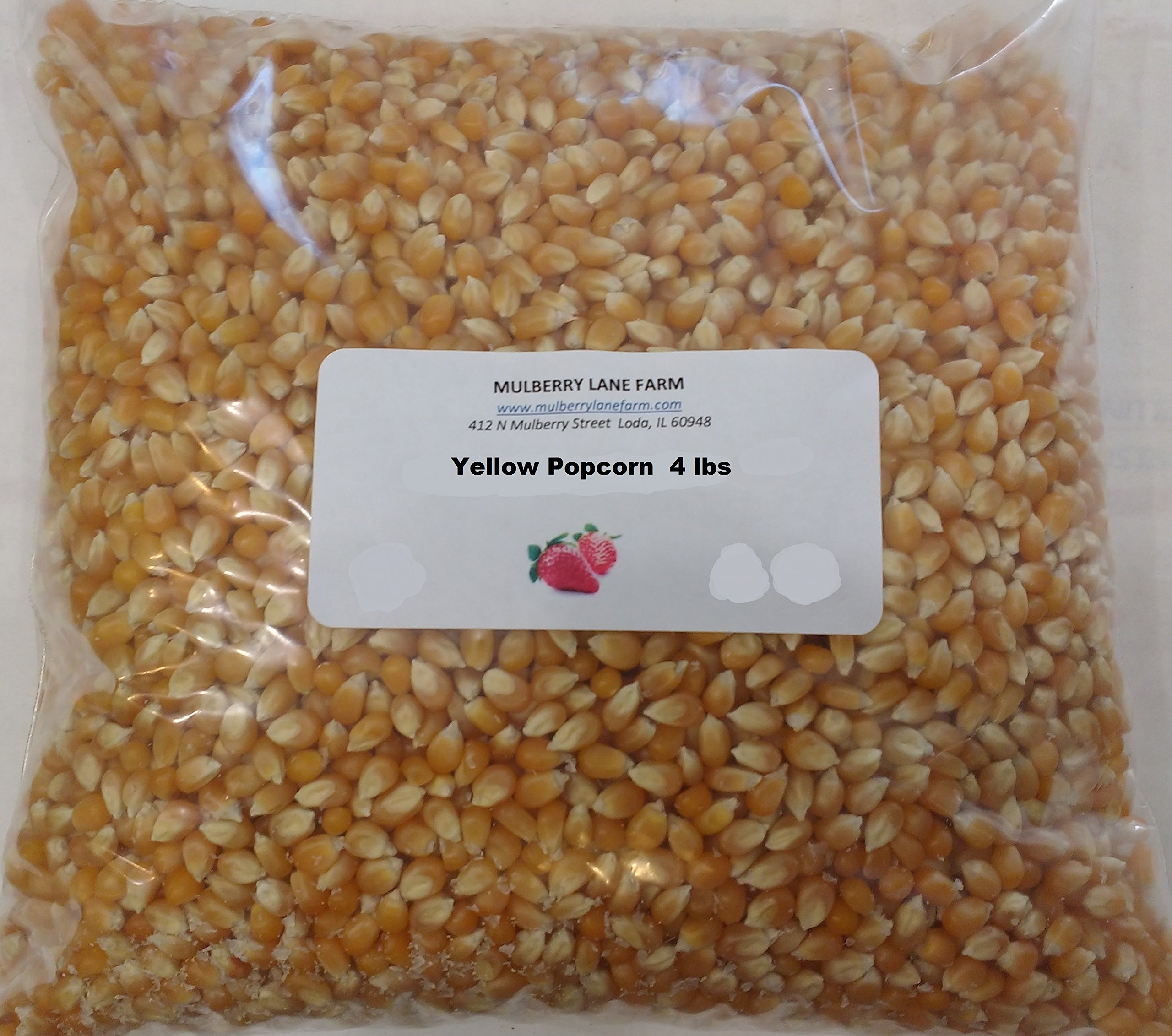 Yellow Popcorn Seeds 4 Pounds (Four lbs) Kernels Premium Gourmet, All Natural, Non-GMO, Gluten Free, GF, BULK.