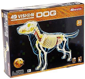 Amazon.com: 4D - Full Skeleton Dog Anatomy Model by FameMaster: Toys ...