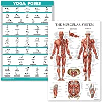 """QuickFit Yoga Poses and Muscular System Anatomical Poster Set - Laminated 2 Chart Set - Yoga Position Exercise Routine & Muscle Anatomy Diagram (18"""" x 27"""")"""