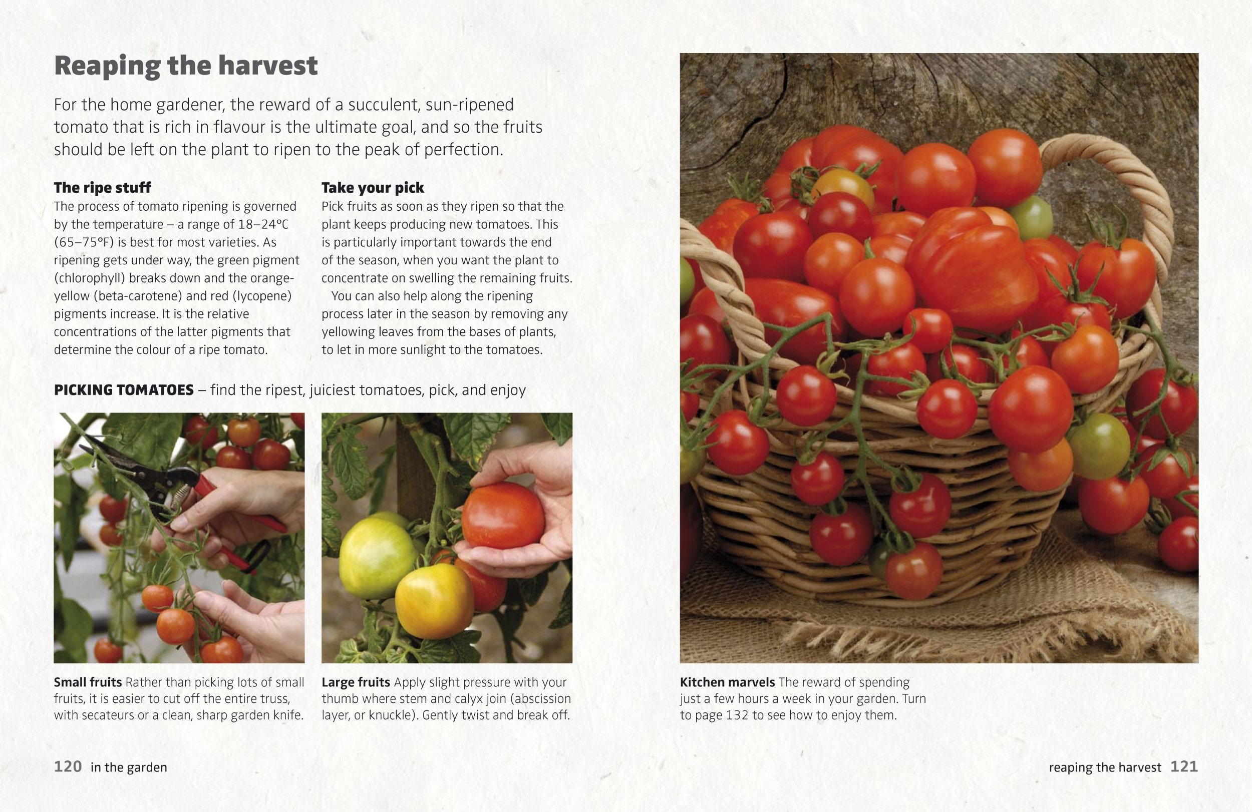 The Tomato Book: How to Grow and Cook Tomatoes: Sofia