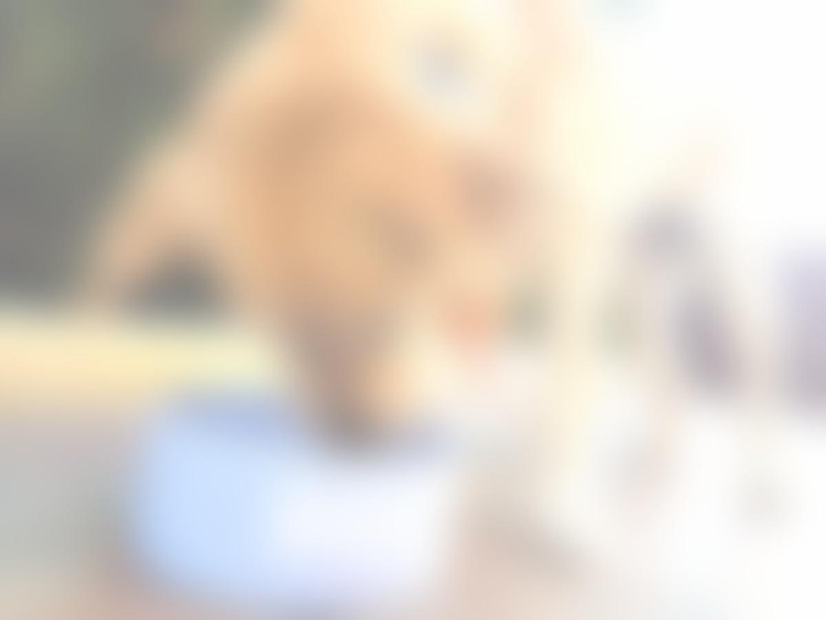 Bebedero o Comedero para Perro Grande personalizado con nombre (Hecho en Cerámica): Amazon.es: Handmade