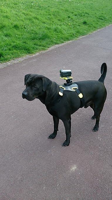 Sony AKA-DM1 - Arnés para perro ajustable con montura integrada para Sony Action Cam, color negro y amarillo: SONY: Amazon.es: Electrónica