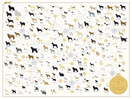 Amazon Pop Chart Lab Dog Breed The Diagram Of Dogs Poster