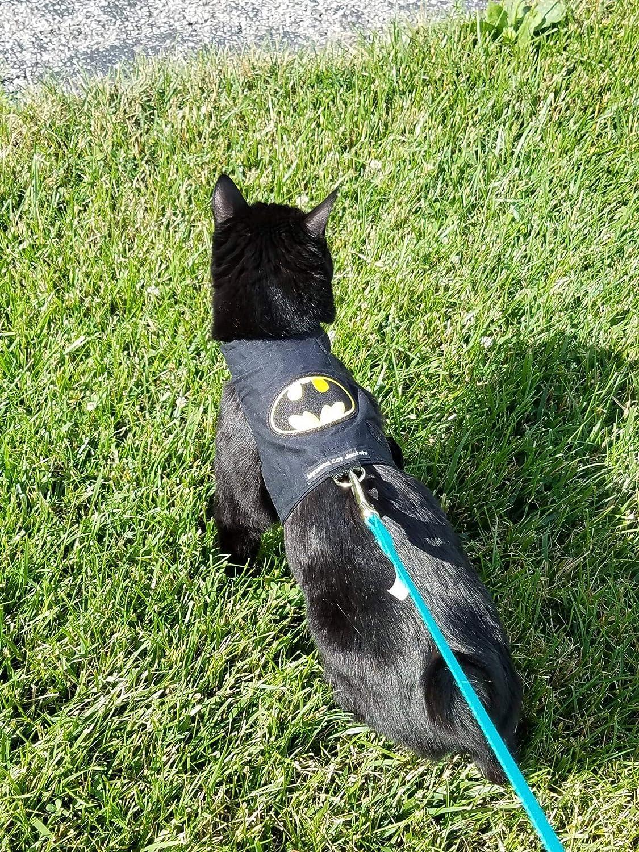 Mynwood - Arnés para Gato de Batman hasta 8 Meses, a Prueba de Escape: Amazon.es: Productos para mascotas