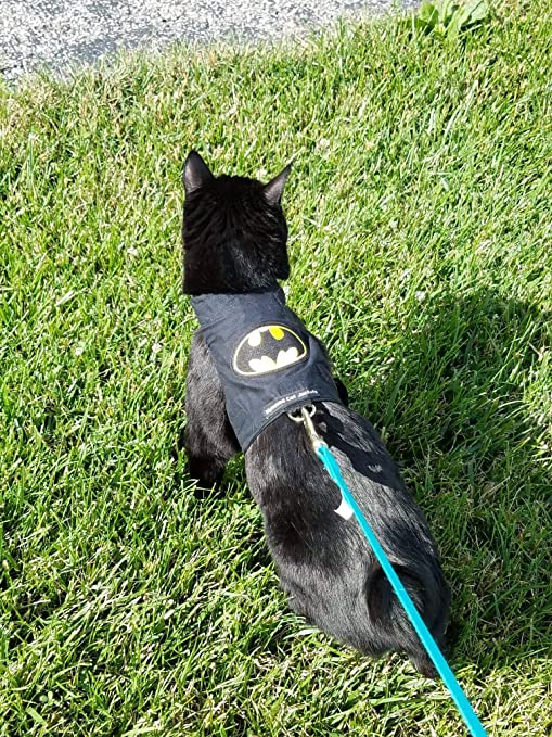 Mynwood - Arnés para Gato de Batman para Adulto, a Prueba de Escapes