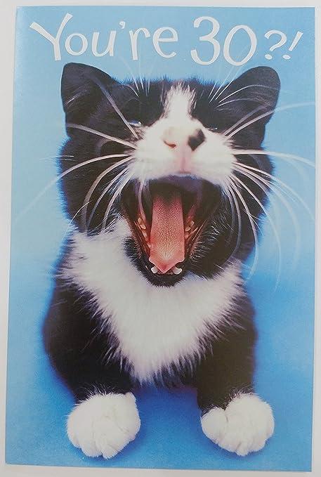 Funny Humor Cute Kitty Cat Happy Birthday Greeting Card