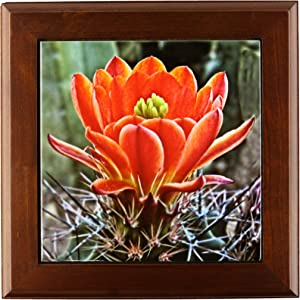 3dRose ft_32341_1 Decorative Colorful Garden Botanic Classic Plant SW Southwest Desert Cactus Red Flower-Framed Tile, 8 By 8-Inch