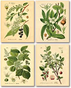 Gango Home Decor Popular Old-Fashioned Plant Botanical Prints; Four 8x10in Poster Prints