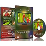 Relaxation DVD - Tropical Birds with Music or Nature Sound