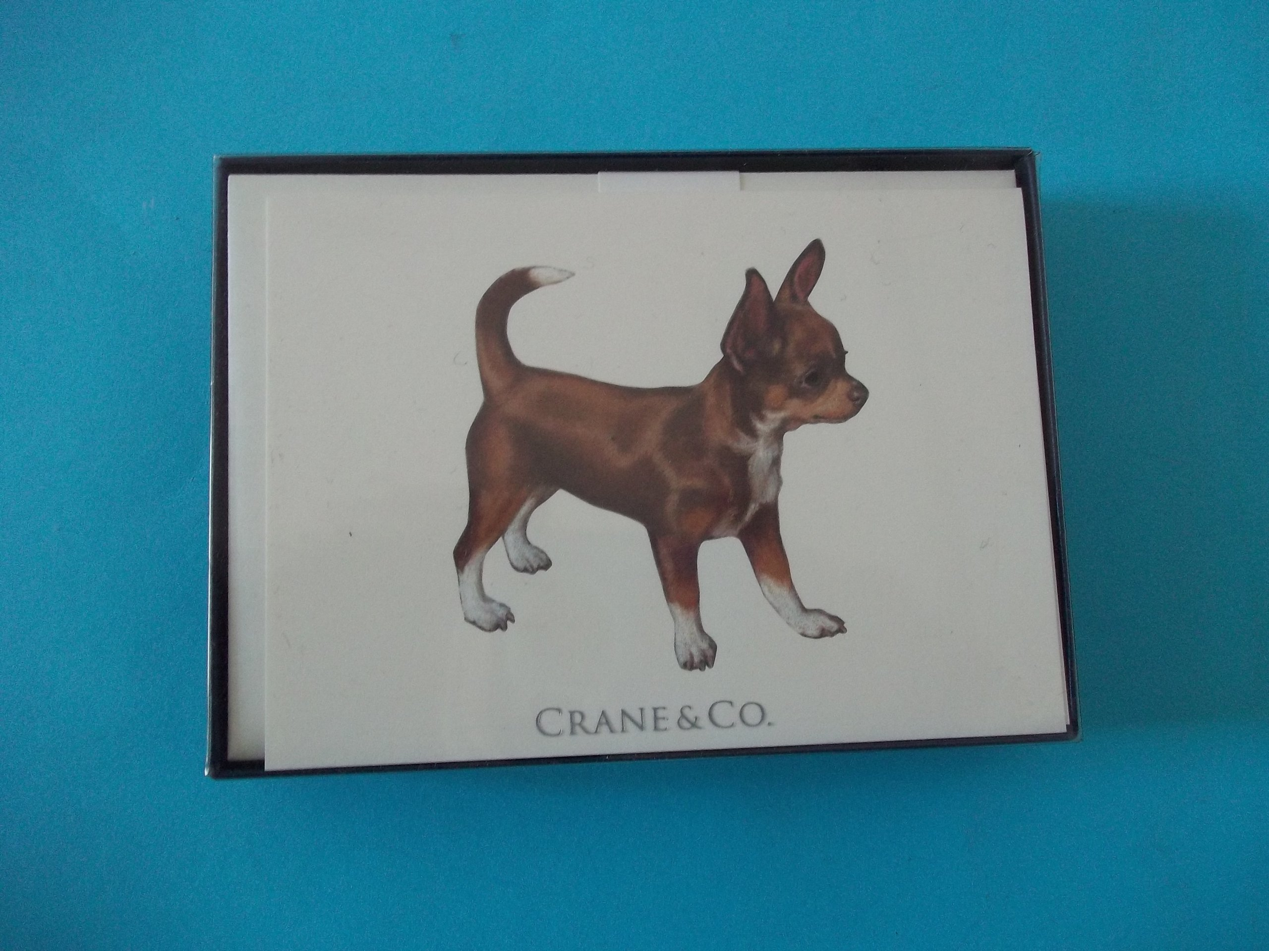 Crane SN1702 Chihuahua on Natural White Cover 10 Cards 10 Envelopes 3 15/16'' x 5 9/16''