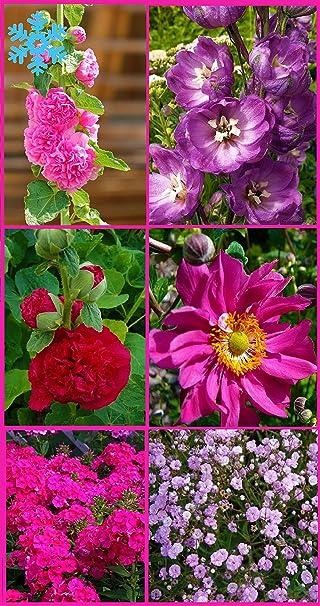 Immer Blühender Garten big set immerblühender winterharter farbgarten stauden set 6