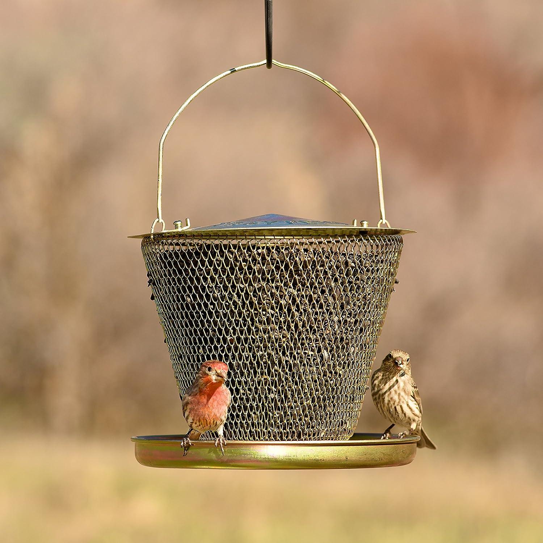 Opus [Perky-Pet] No/No UD00314 Bandeja de Latón Comedero de aves: Amazon.es: Jardín