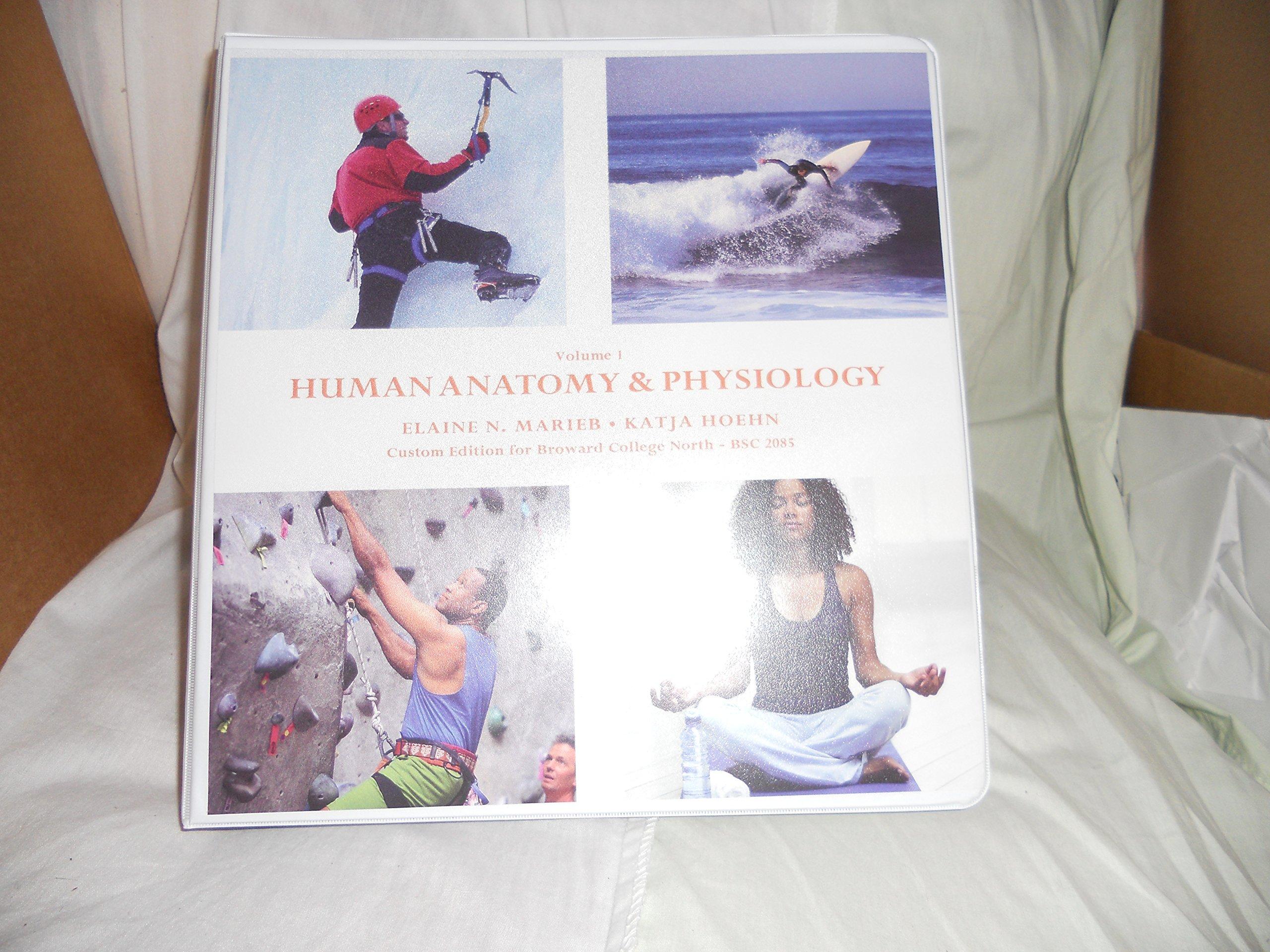Human Anatomy Physiology Volume 1 Hoehn Marieb 9781256834533