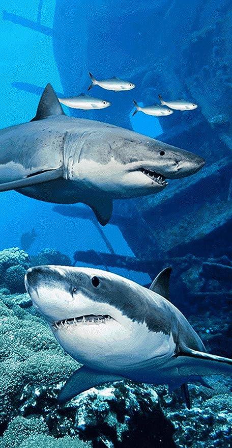 Toalla de tiburón (Tiburon Blanco Australia Wonder toalla de ...