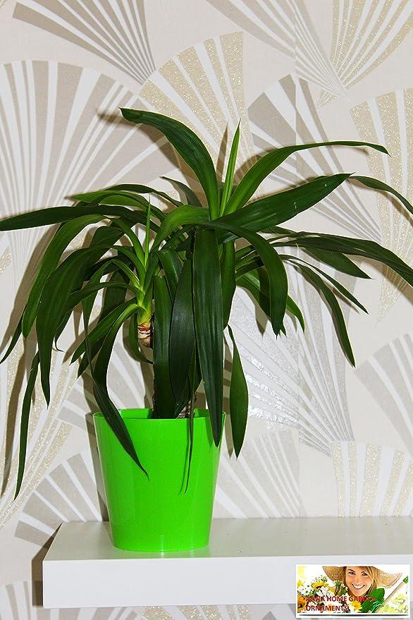Macetas, redondo de 12 colores a elegir, muchos tamaños planta ...