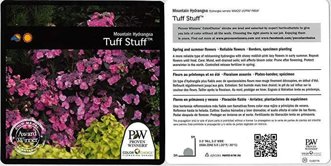 d45f57fff8 Amazon.com: Tuff Stuff Reblooming (Mountain Hydrangea) Live Shrub, Blue,  Pink, and Purple Flowers, 1 Gallon: Garden & Outdoor