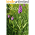 POND: Seven Year Diary of a Wild-Life Pond