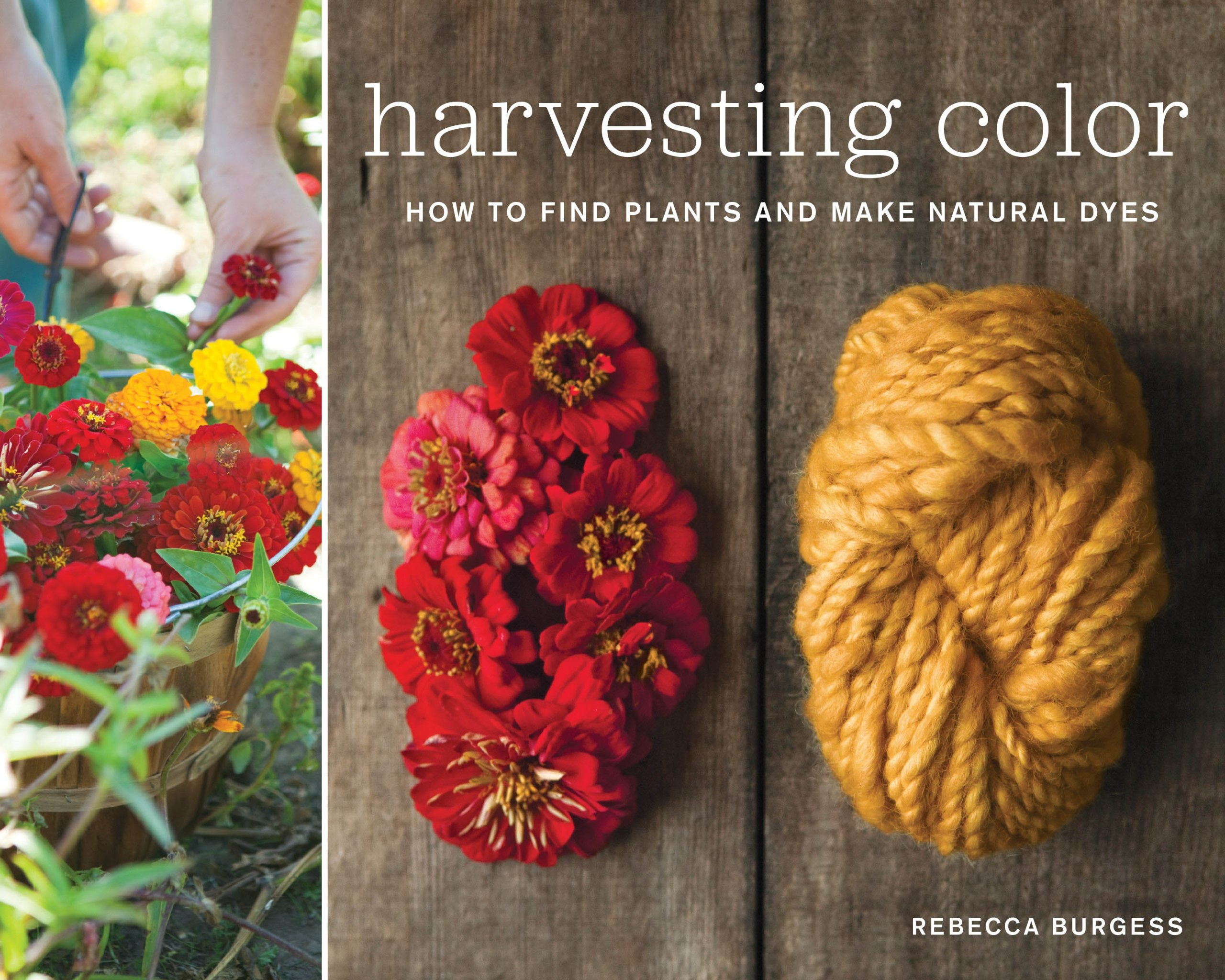 Harvesting Color: How to Find Plants and Make Natural Dyes: Rebecca ...