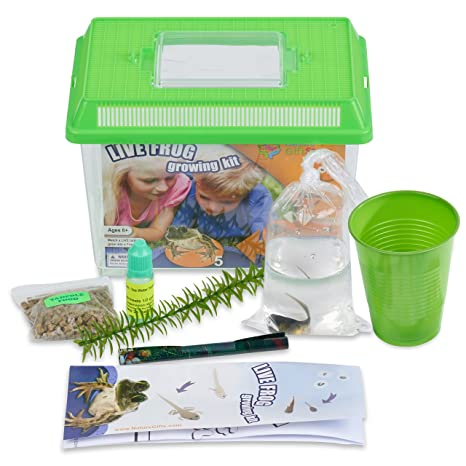 LIVE Frog Growing Kit 1 Tadpole Free Mail In CERTIFICATE For Later