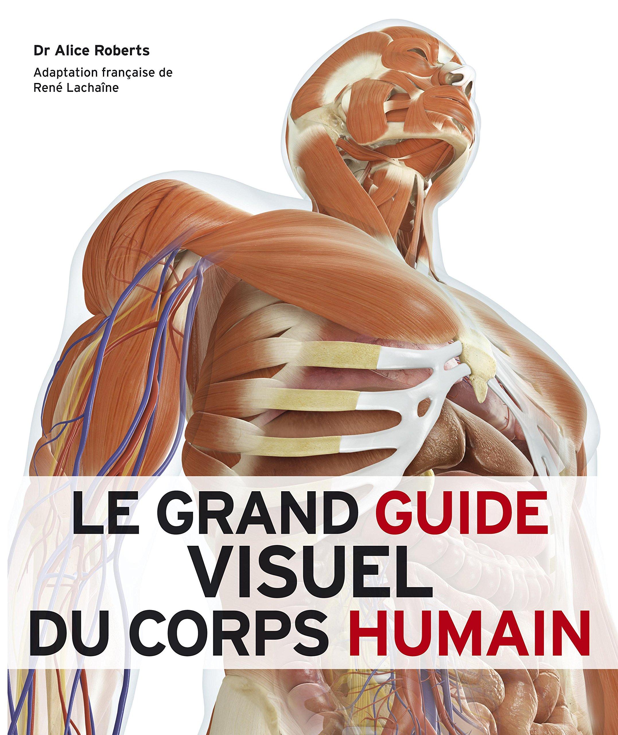 Ungewöhnlich Pearson Visuelle Anatomie Und Physiologie Ideen ...