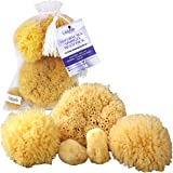 Natural Sea Sponges 5 pc Multi Pack the Perfect Spa Gift Set to Pamper Moms, Brides, Girlfriends, Teens; Gentle, Hypoallergenic, Great for Bath, Shower & Facial Cleansing by Constantia Beauty