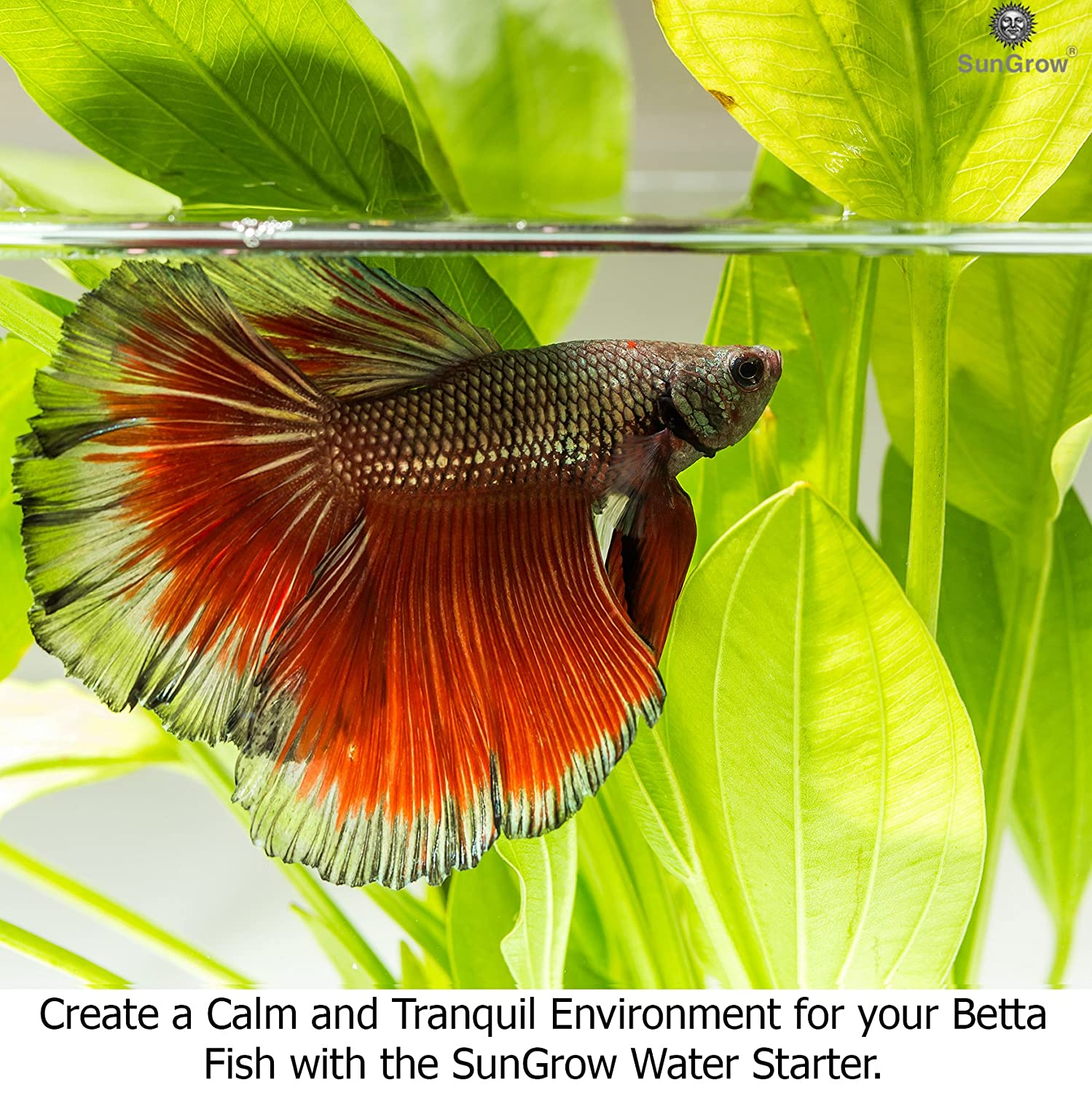 Amazon.com : Betta Water Starter - Safe and Natural Water ...