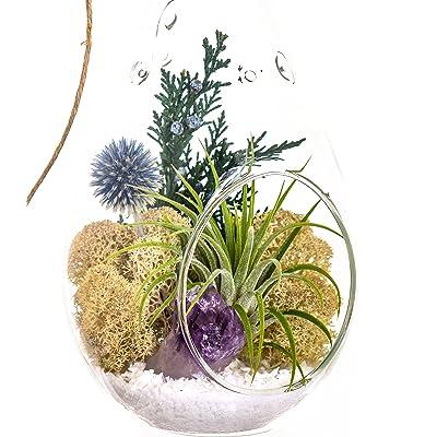 "Bliss Gardens Air Plant Terrarium with Purple Amethyst Crystal - 7"" Teardrop Glass - Shabby Chic: Garden & Outdoor"