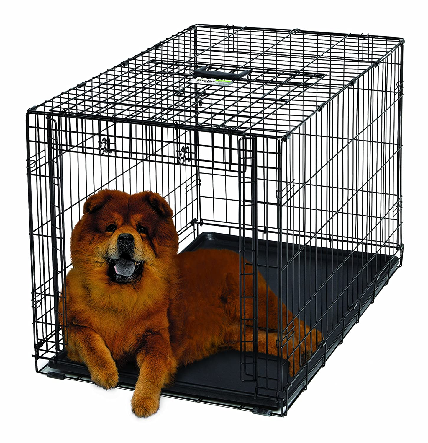 Amazon.com : MidWest Homes For Pets Ovation Single Door Dog Crate, 36 Inch  : Pet Supplies