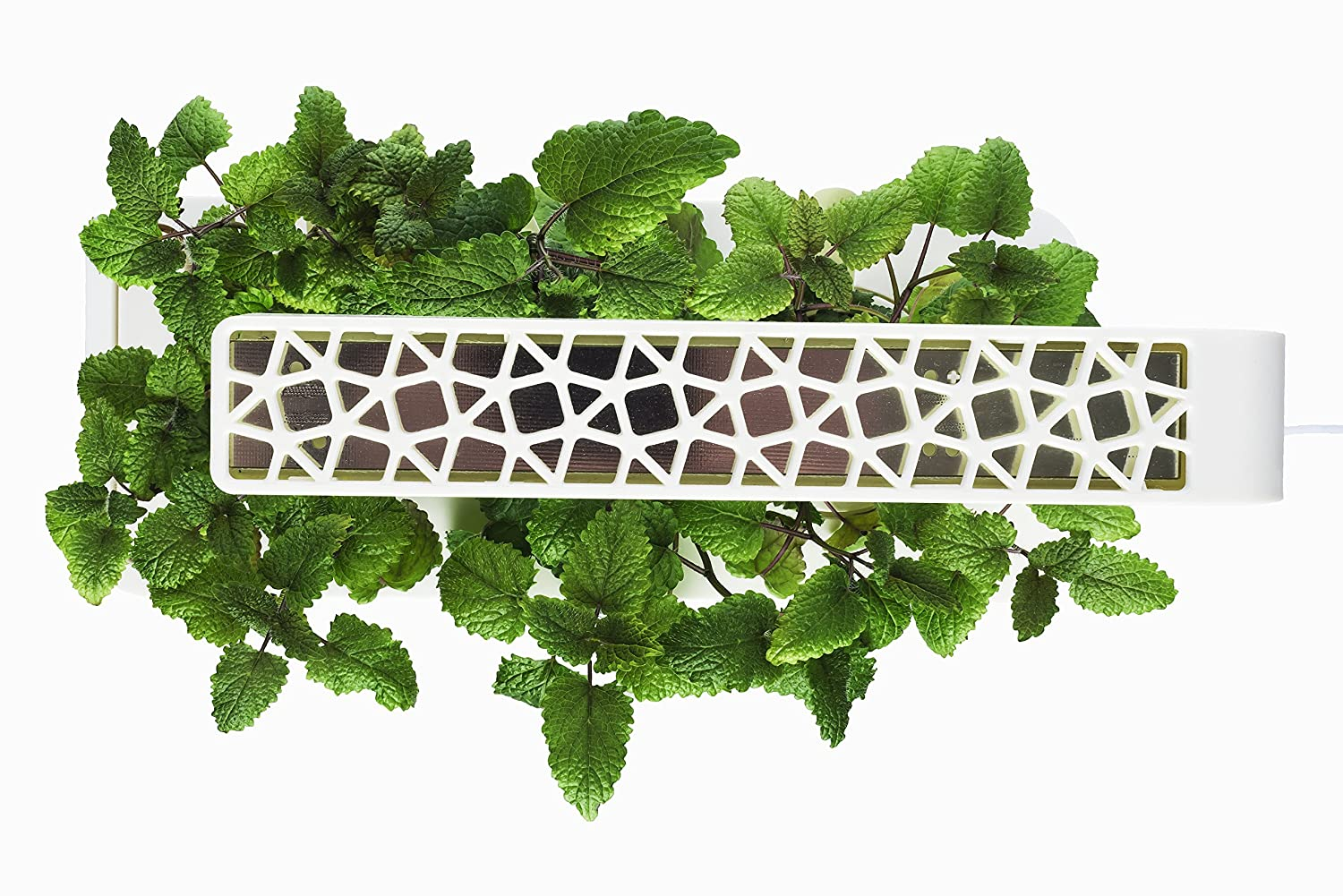 Click Grow Indoor Smart Herb Garden With 3 Basil Cartridges White Lid Amazonca Patio Lawn