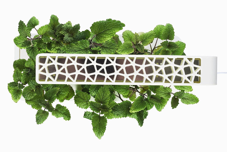 Amazon.com : Click U0026 Grow Indoor Smart Fresh Herb Garden Kit With 3 Basil  Cartridges U0026 White Lid | Self Watering Planter U0026 Patented Nano Tech Medium  For ...