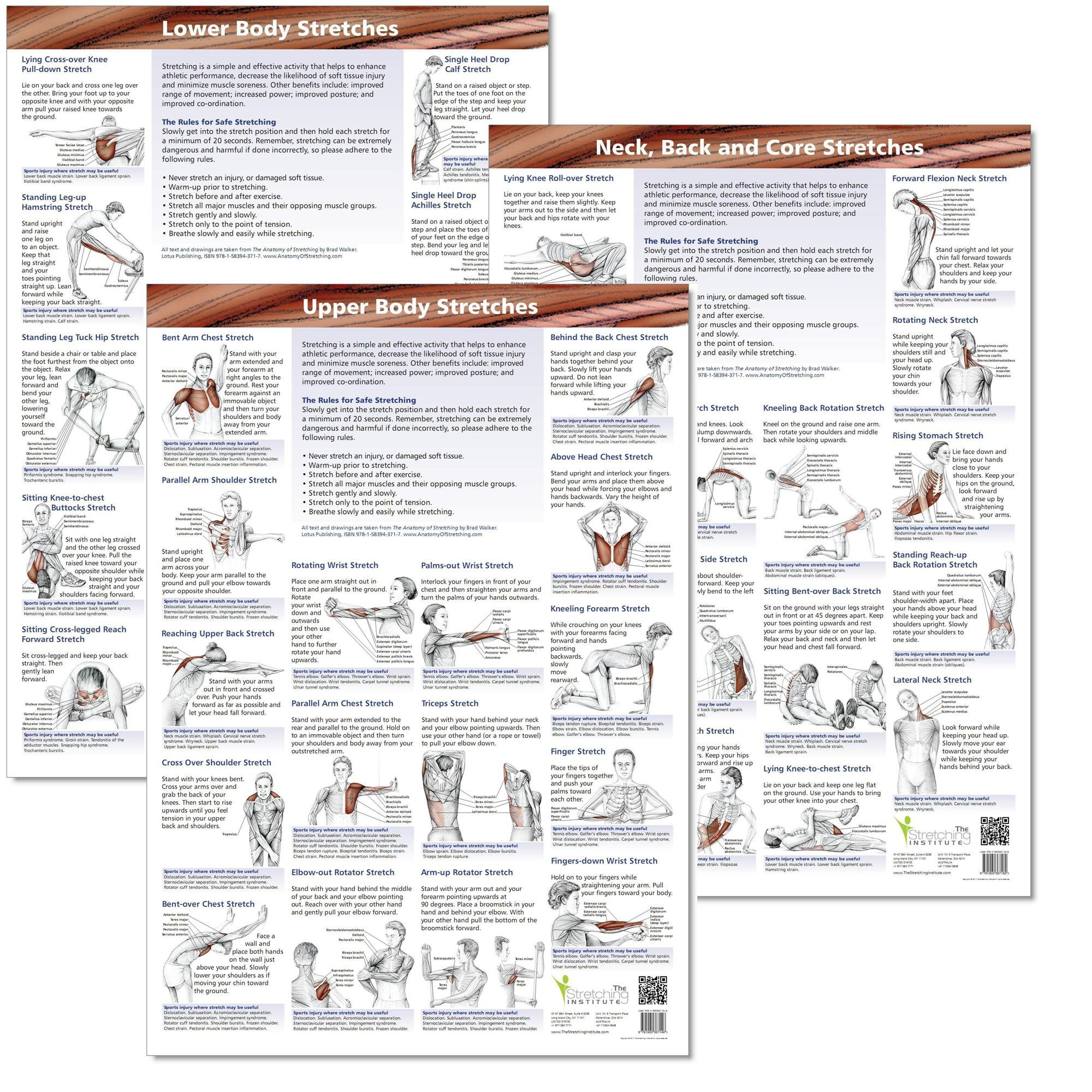 Anatomical Stretching Charts (set of 3)