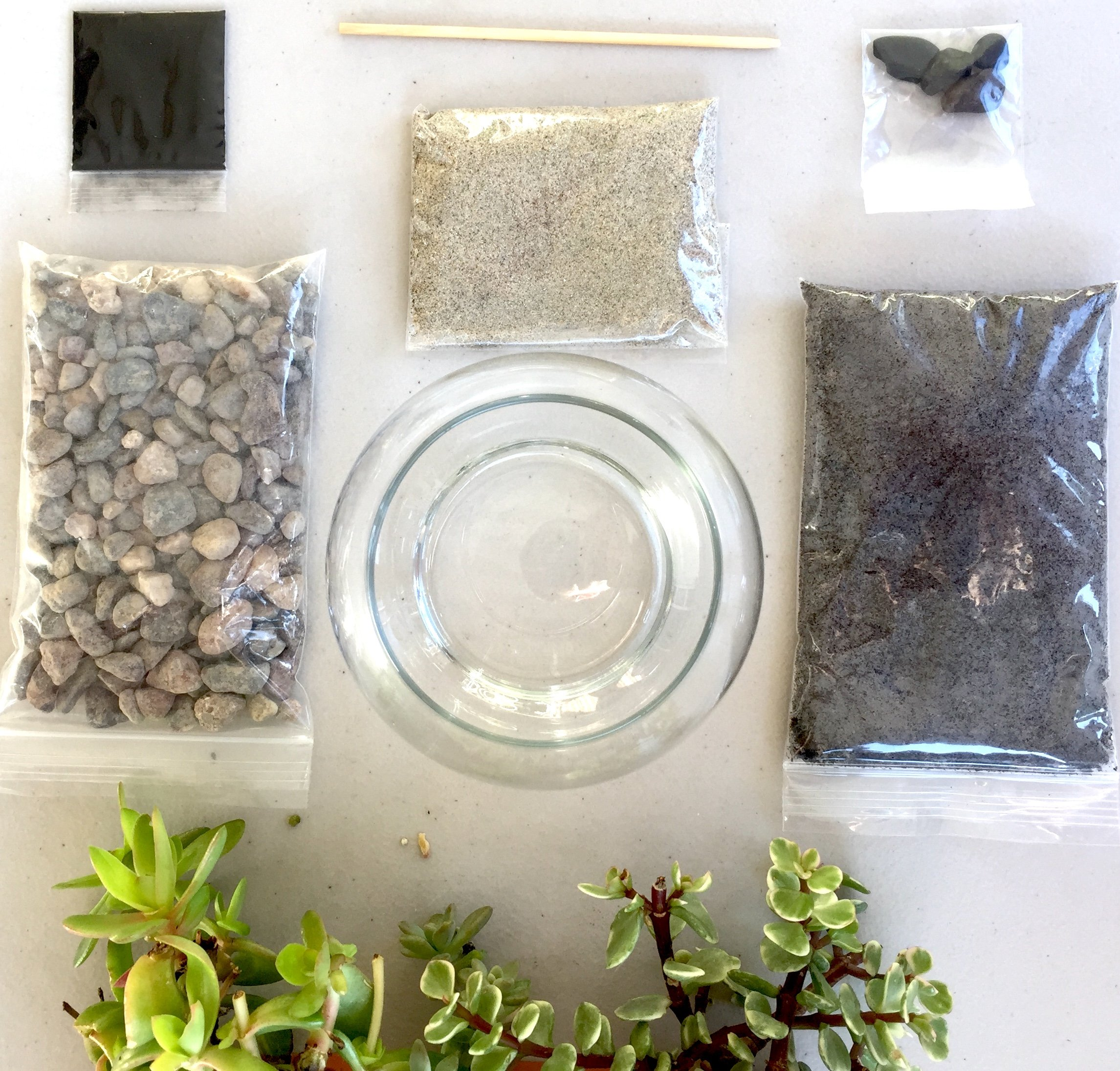 Complete Terrarium Kit: Succulent Planter with Glass Globe, Organic Soil, Beach Sand & Decorative Stones, All Supplies for Succulent, Cactus, and Fairy Garden (5 x 4.5 inches)