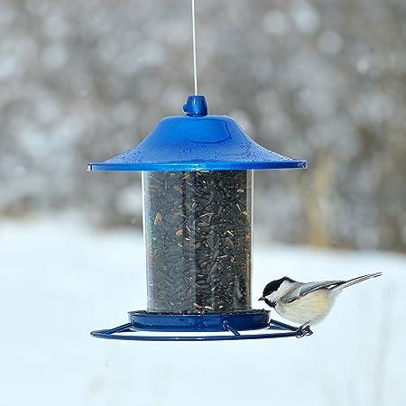 Opus [Perky-Pet] 312B Comedero para Pájaros, Transparente: Amazon.es: Productos para mascotas