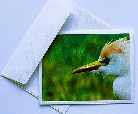 Amazon Com Tarjetas De Notas Para Pájaros Originales