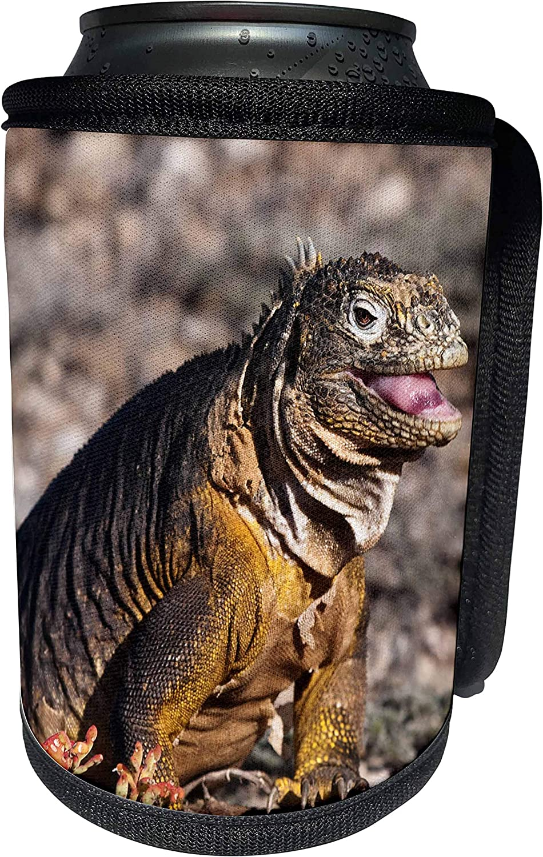 3dRose Danita Delimont - Galapagos Islands - Ecuador, Galapagos Islands, Land Iguana - SA07 MDE0229 - Michael DeFreitas - Can Cooler Bottle Wrap (cc_86262_1)