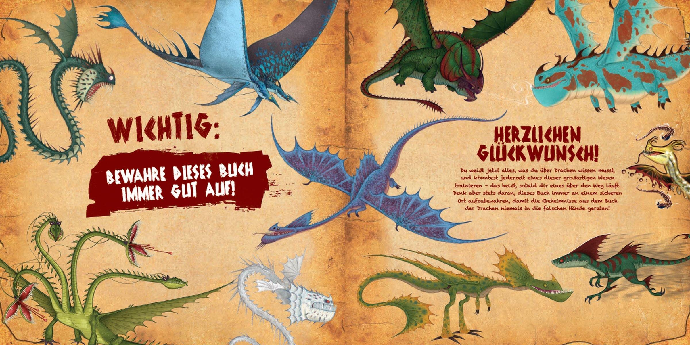 Dragons Das Buch Der Drachen Amazon De Nicole Hoffart Maggie
