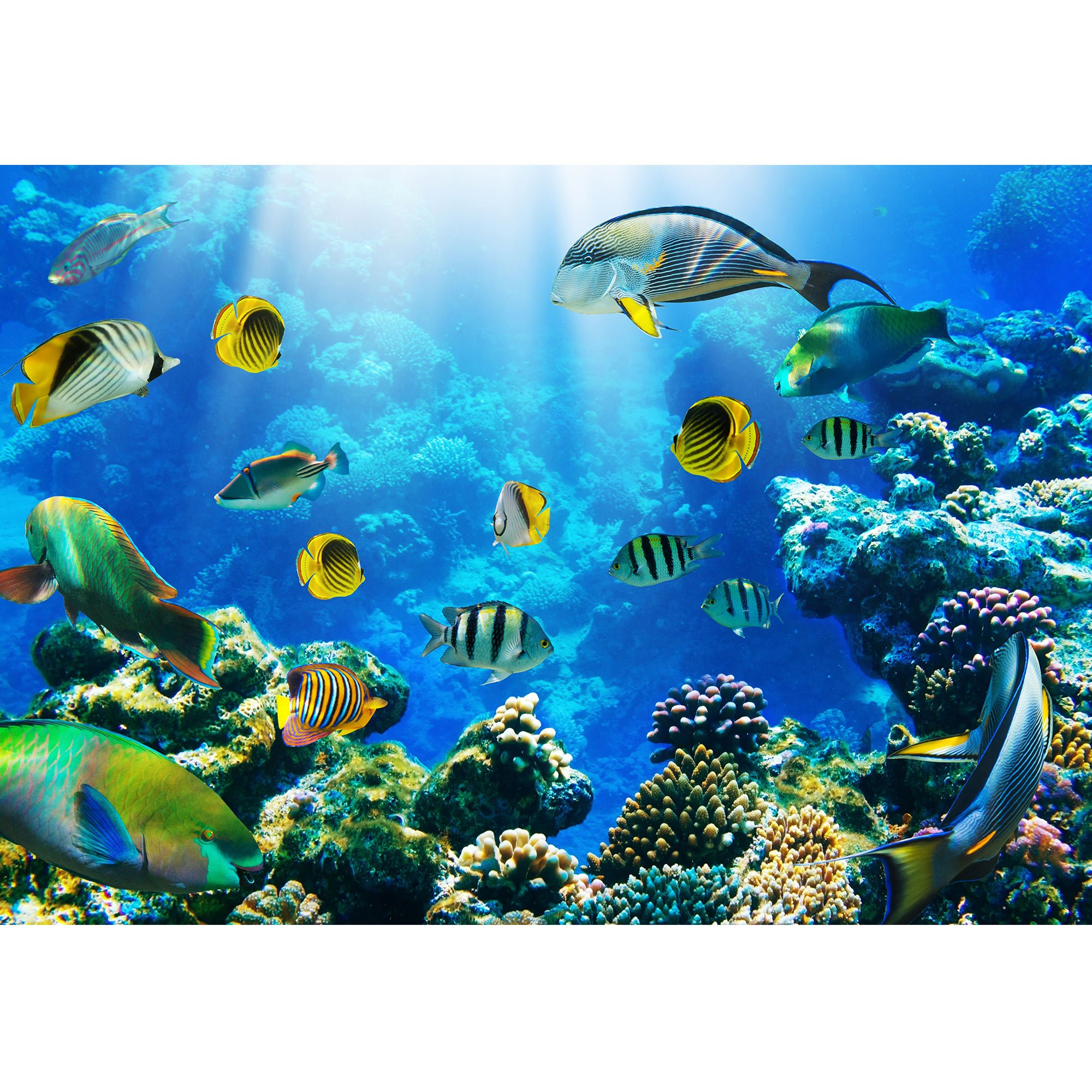 wall26 - Photo of a Tropical Fish on a Coral Reef - Removable Wall Mural | Self-adhesive Large Wallpaper - 100x144 inches by wall26 (Image #2)