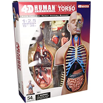 4D Vision Deluxe Human Anatomy Torso Model: Toys & Games