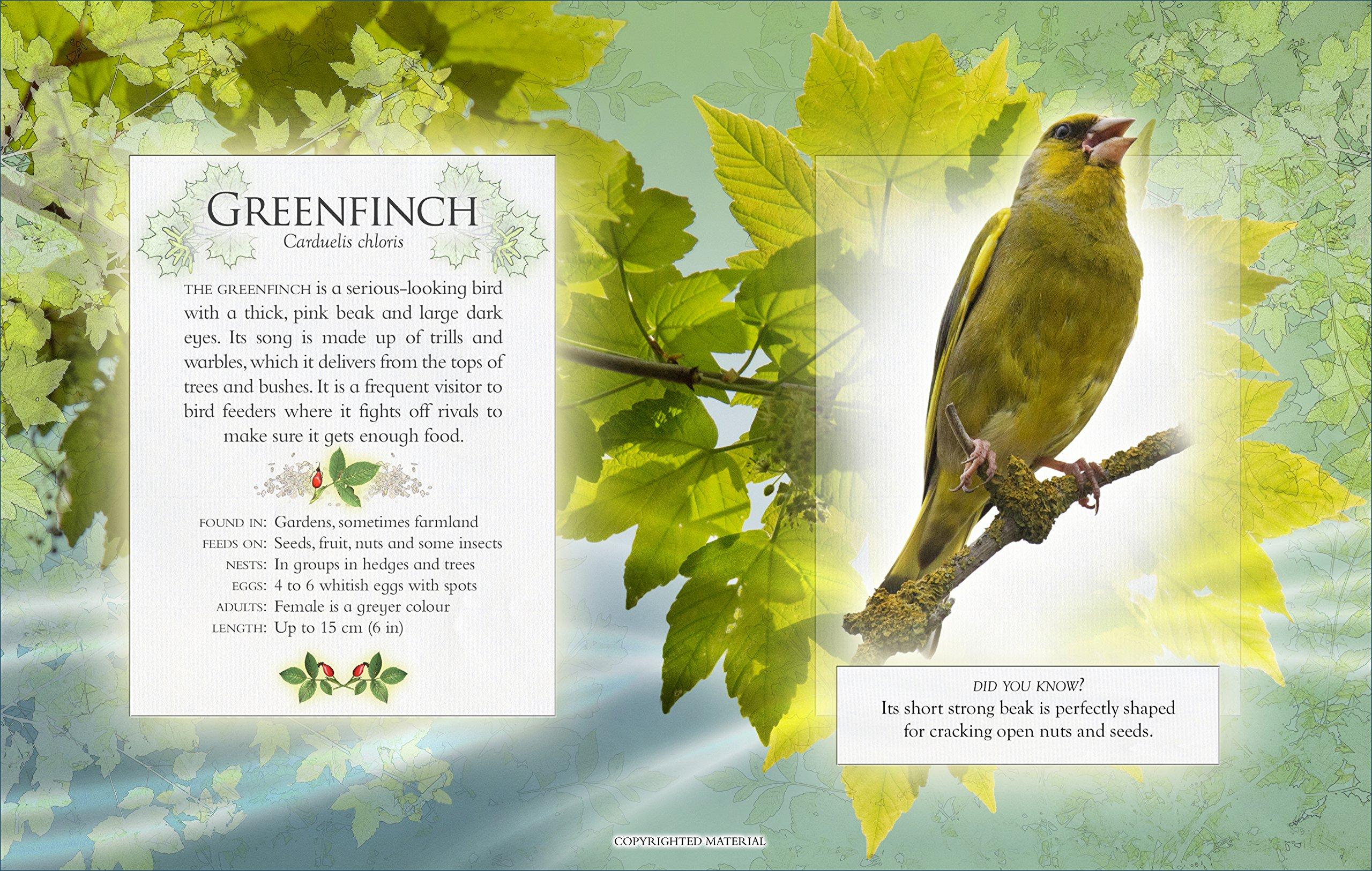 the little book of garden bird songs andrea pinnington caz