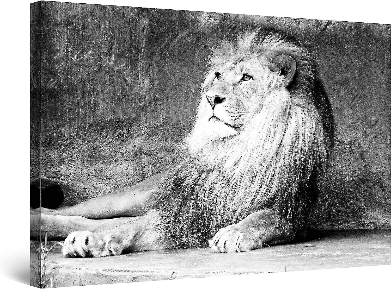 Startonight Cuadro sobre Lienzo en Blanco y Negro Rey Leon, Impresion en Calidad Fotografica Enmarcado y Listo Para Colgar Diseño Moderno Decoración Formato Grande 80 x 120 CM