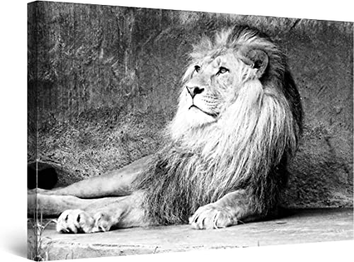Startonight Canvas Wall Art Black and White Abstract Lion King Animals Jungle