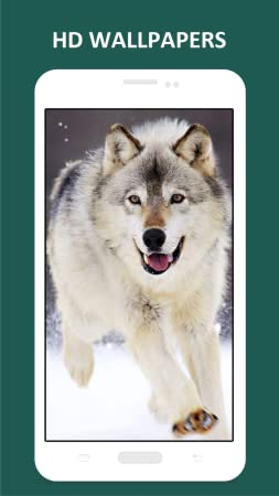 Amazon Com Cool Wolf Hd Wallpapers Appstore For Android