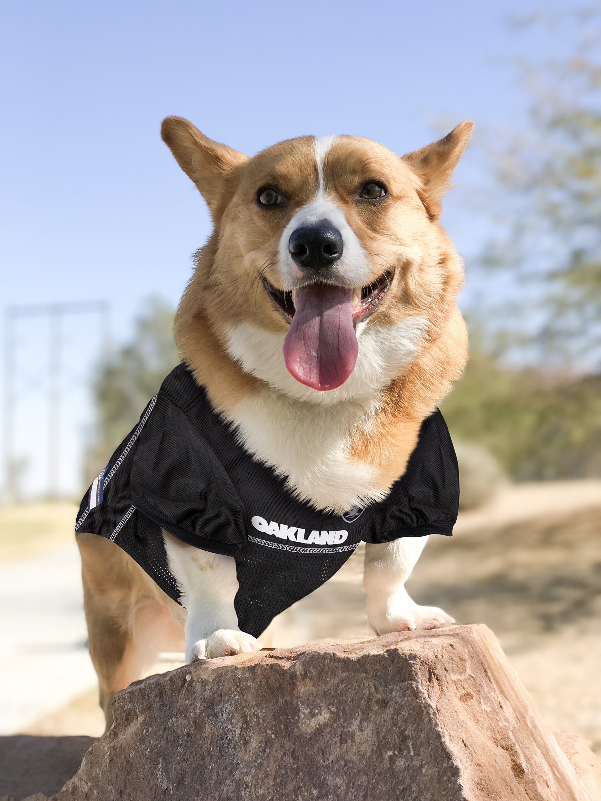 e1af93318 Pets First NFL OAKLAND RAIDERS DOG Jersey