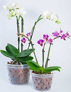 Plastic Clear Slotted Orchid Pots